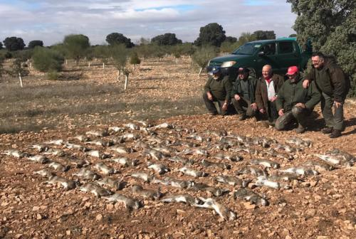 Descastes de conejos
